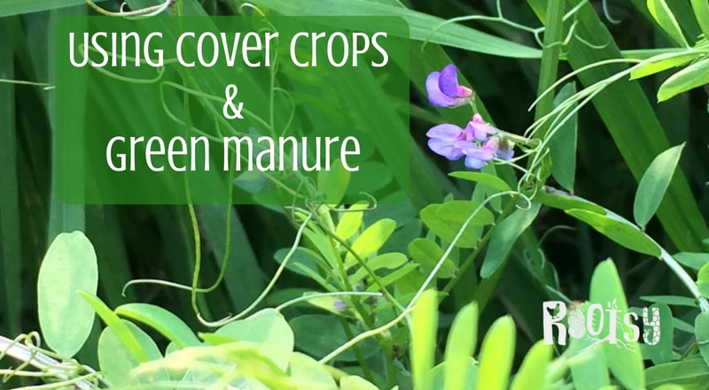 Using Cover Crops and Green Manure to Improve the Soil