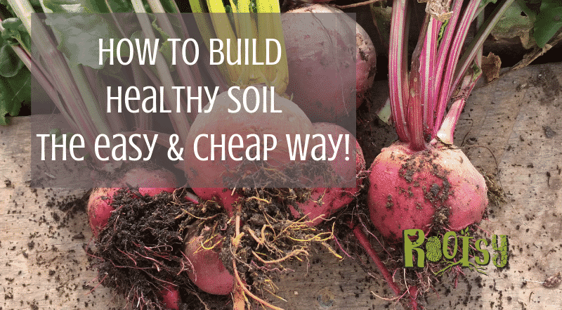 Cheap and Easy Ways to Build Healthy Soil