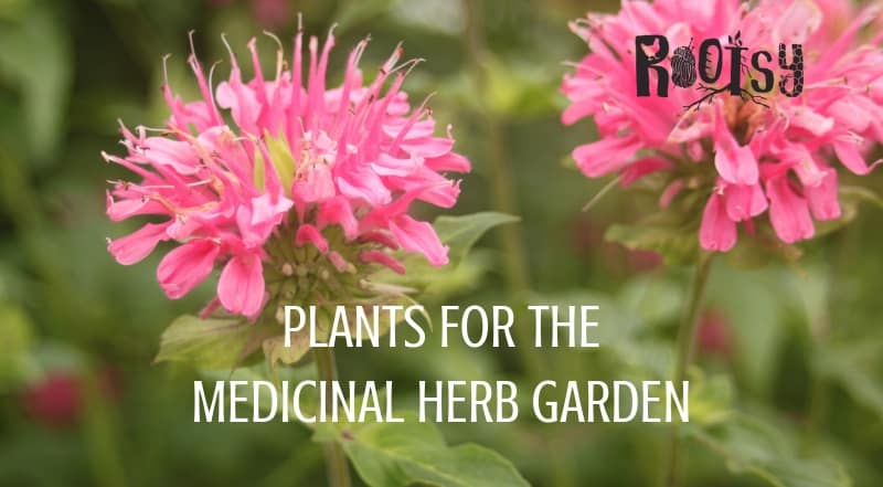 Plants for the Medicinal Herb Garden