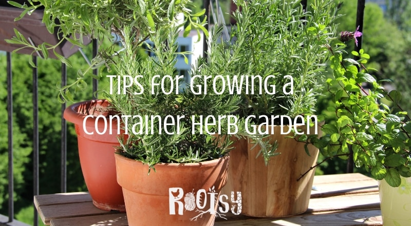 Tips For Growing A Container Herb Garden Rootsy Network