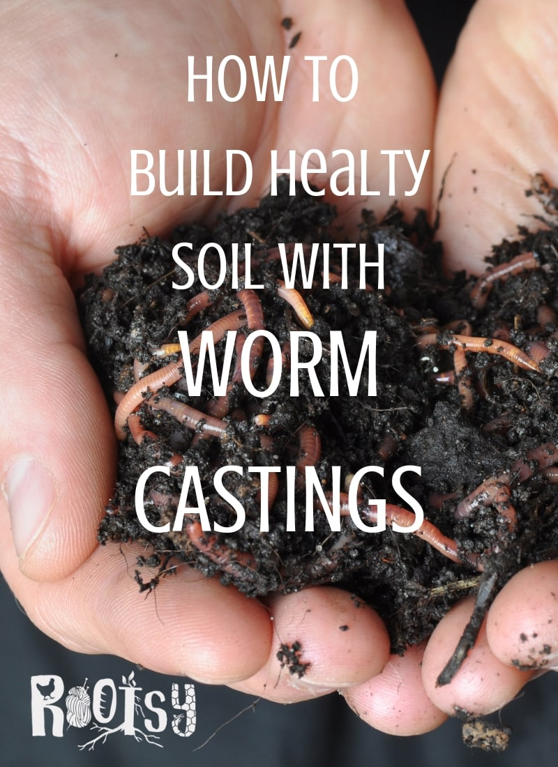 image of two hands holding worms and worm castings