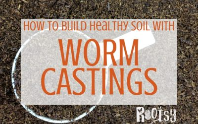 Using Worm Castings to Build Healthy Soil