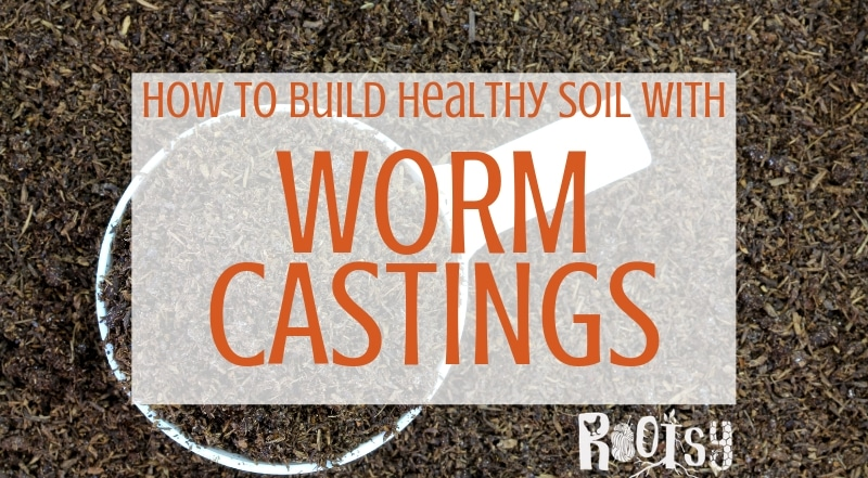 image of worm castings