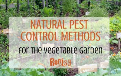 Natural Pest Control in The Vegetable Garden
