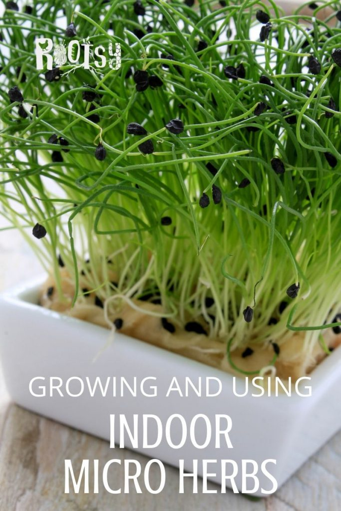 image of chive micro greens growing in pot