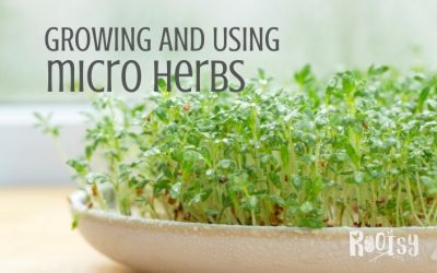 Growing and Using Micro Herbs (Such as Micro Basil)