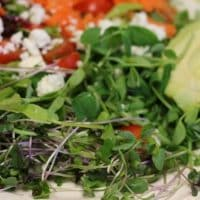 MicroGreen Salad for Seasonal Eating