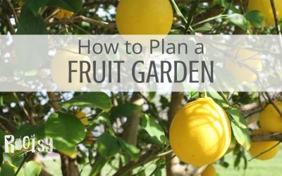 Planting a Low Maintenance Fruit Garden and Orchard