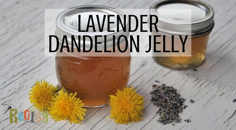 2 jars of lavender dandelion jelly on a white table surrounded by fresh dandelion flowers and dried lavender with text overlay.