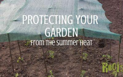 Easy Ways to Help Your Garden Survive Summer Heat