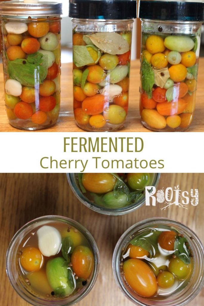 A collage of photos with a row of 3 jars of fermented tomatoes on top, text overlay in the middle, and open jars of fermented tomatoes as seen from above on the bottom.