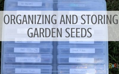 How to organize and store seeds for frugal gardening