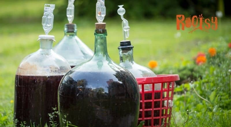several gallon jugs of home brewed wine and mead