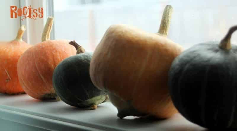 Pumpkins and winter squash lined up on a windowsill.