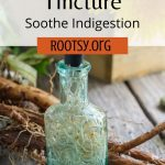 A bottle full of roots and liquid surrounded by dandelion roots, a basket of dandelion flowers, gloves and scissors with text overlay reading: dandelion root tincture - soothe indigestion