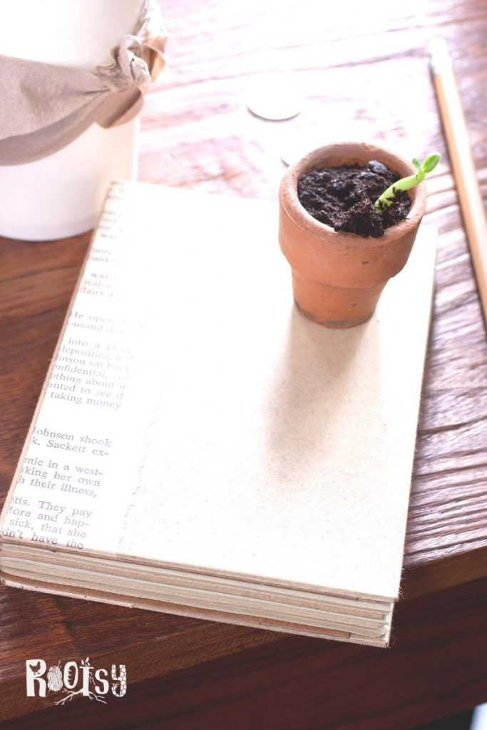 A closed book with a small clay pot with growing seedling sitting on top surrounded by a pencil, coins, and coffee cup.