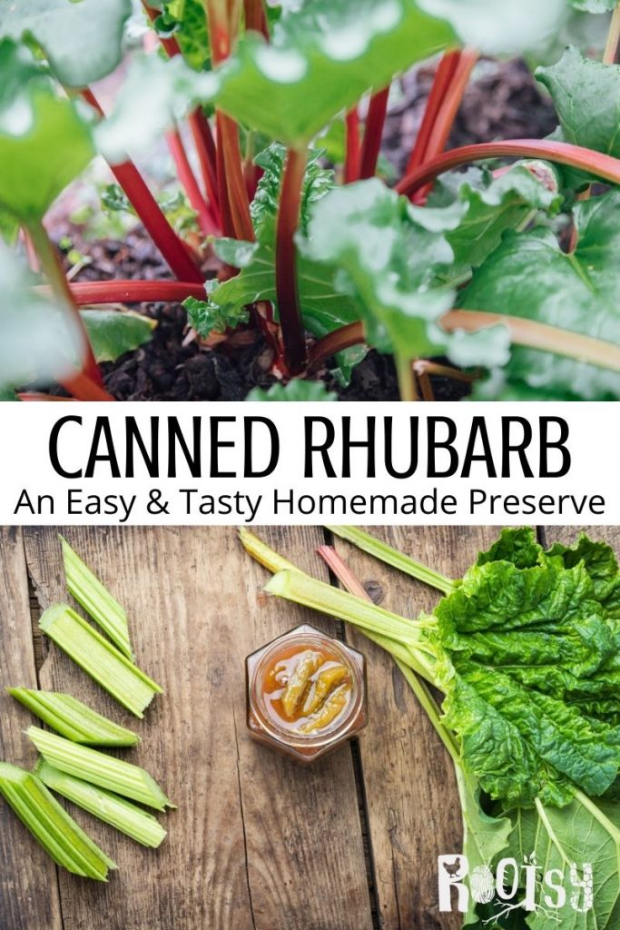 An image of rhubarb stalks growing in the dirt stacked on top of block of text stating: Canned Rhubarb an Easy and Tasty homemade preserve, stacked on top of an image of an open jar of canned rhubarb as seen from above surrounded by fresh stalks of rhubarb.