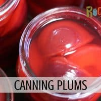 top view of an open jar of canned plums