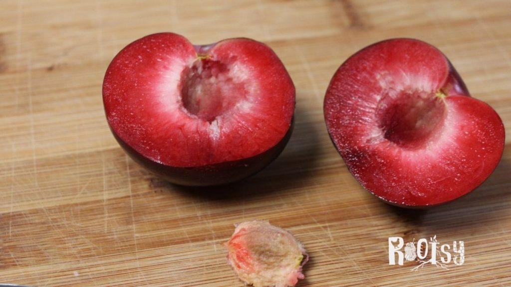 plum cut in half with pit removed for canning