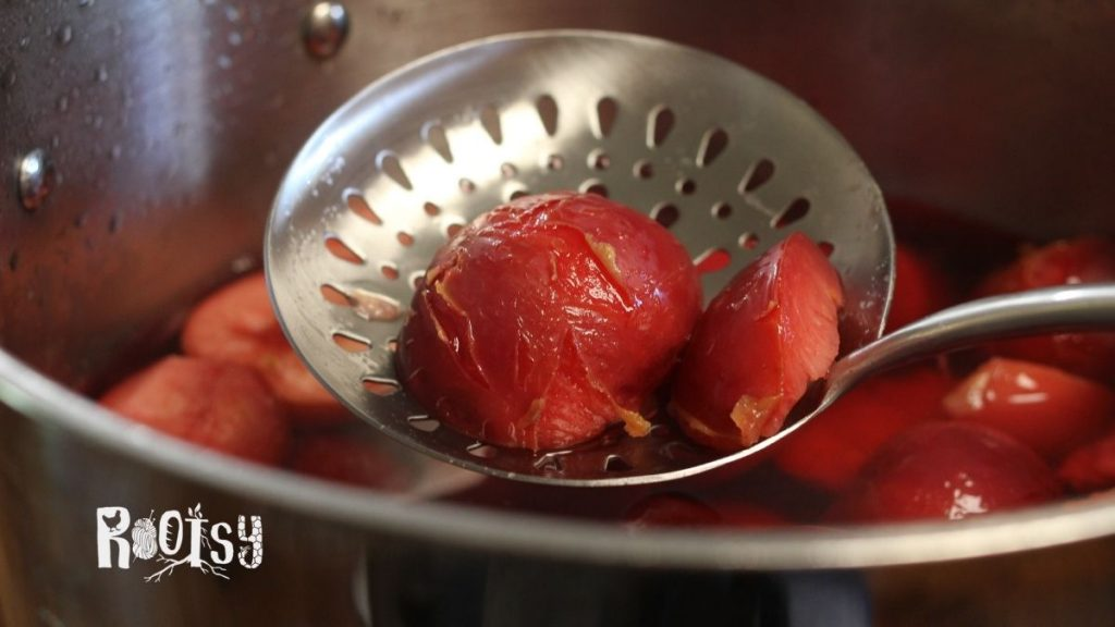 cooked plum halves on slotted spoon for canning