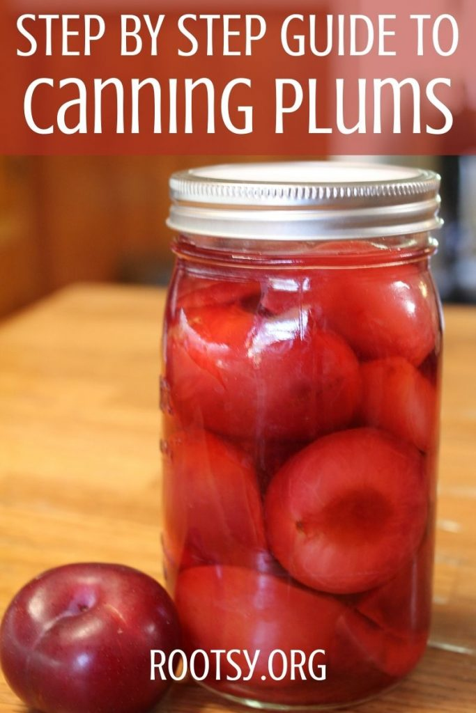 home canned jar of canned plums with a fresh plum beside it